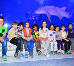 Поездка в Grand Aquarium, Хургада (21.02.2019)